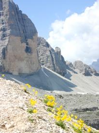 3 Cime Dolomites alpine poppies
