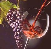 Vino novello new wine November Italy