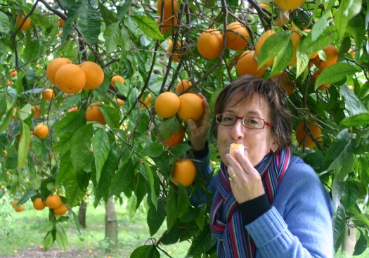 Picking oranges in Sicily