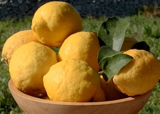 Lemons from Sicily